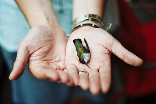 dead hummingbird