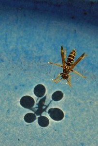 wasp on the surface