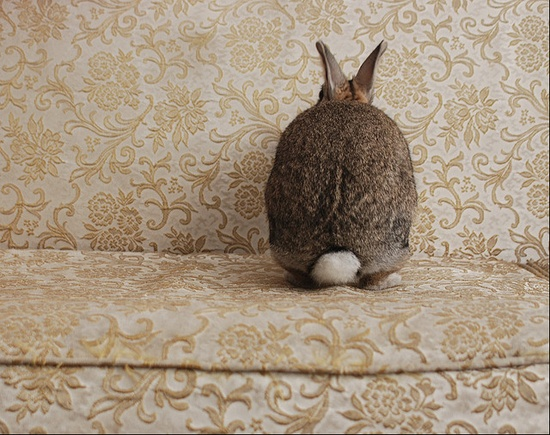 rabbit on couch